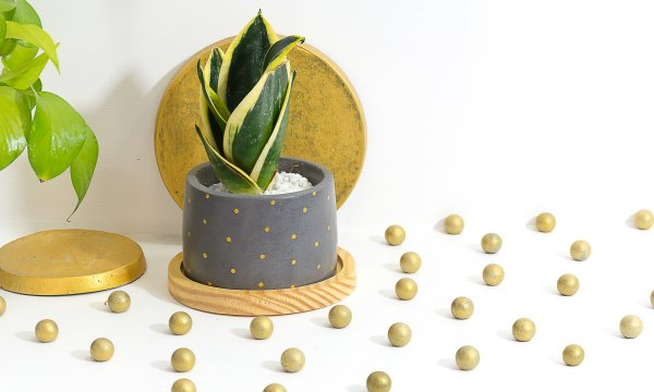 Concrete Cavern Planter