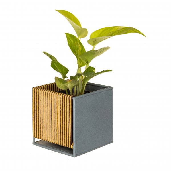 Phantom Planter