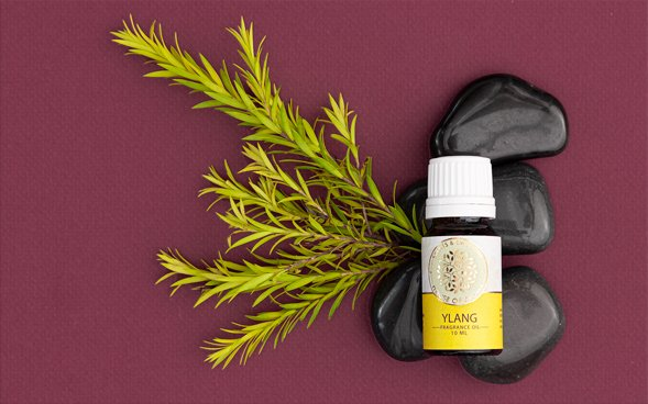 Ylang Fragrance Oil